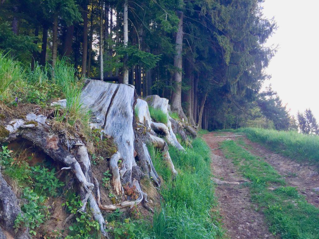 Wanderwege im Schwarzwald