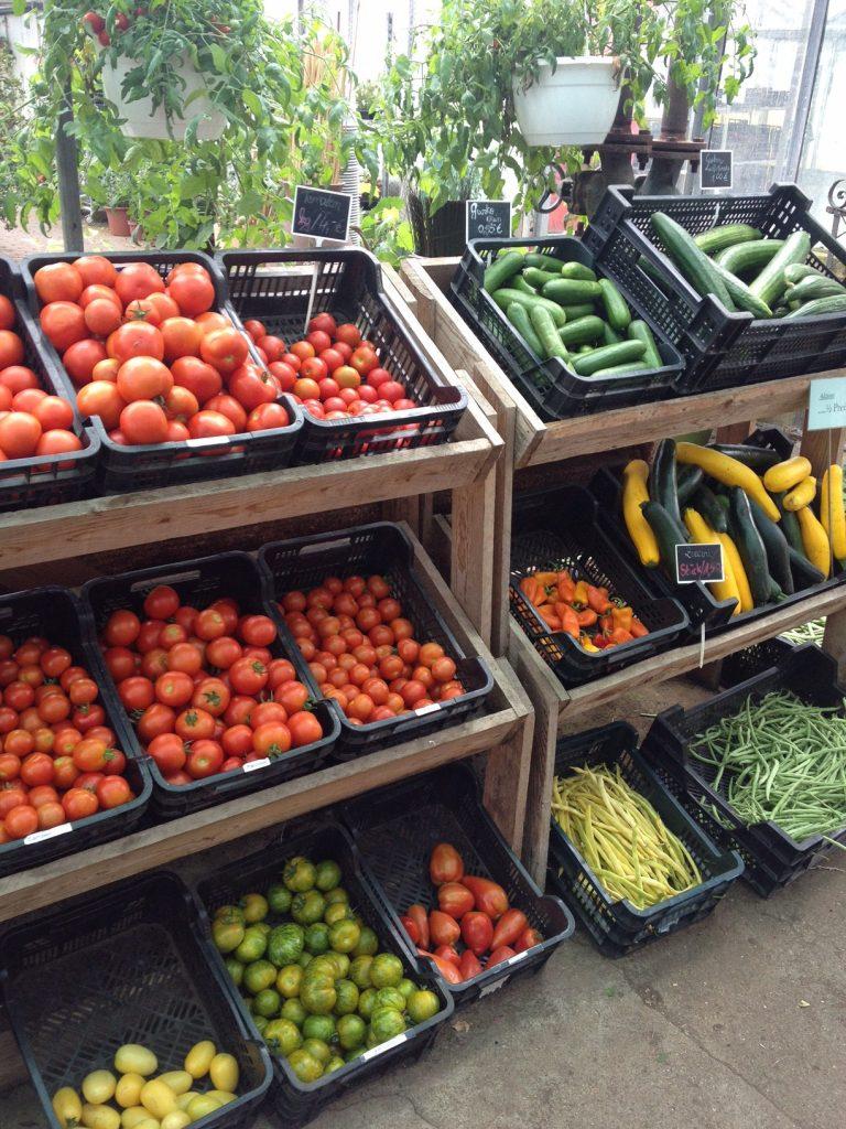 Noch mehr Tomaten auf Usedom