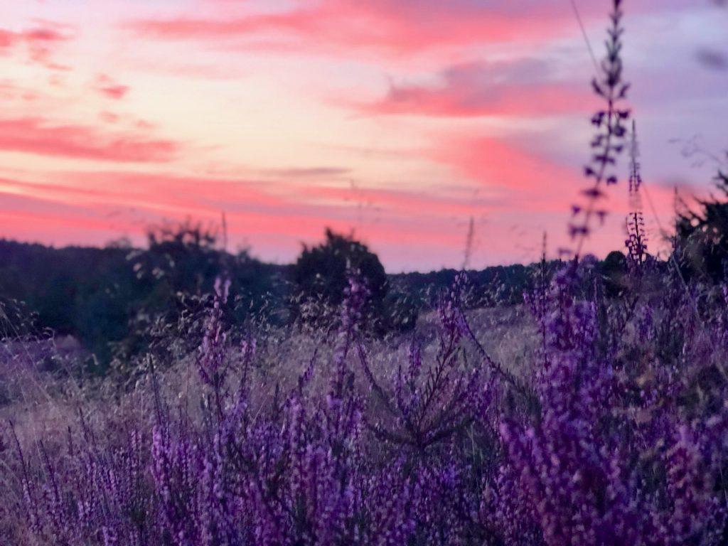 Wanderung Heidschnuckenweg zum Sonnenaufgang