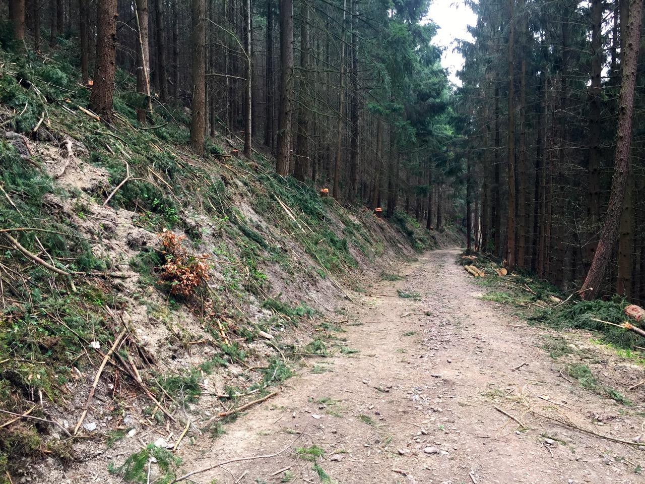 Geierlay Wanderweg