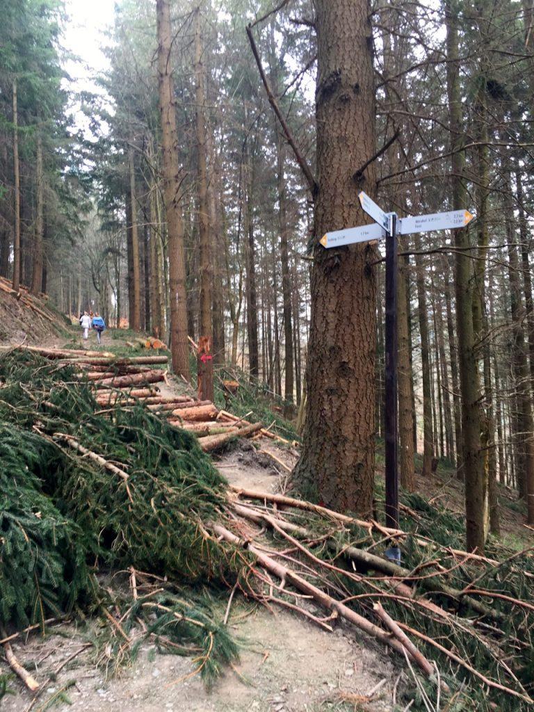 Geierlay Wanderweg - wir klettern ueber Baueme