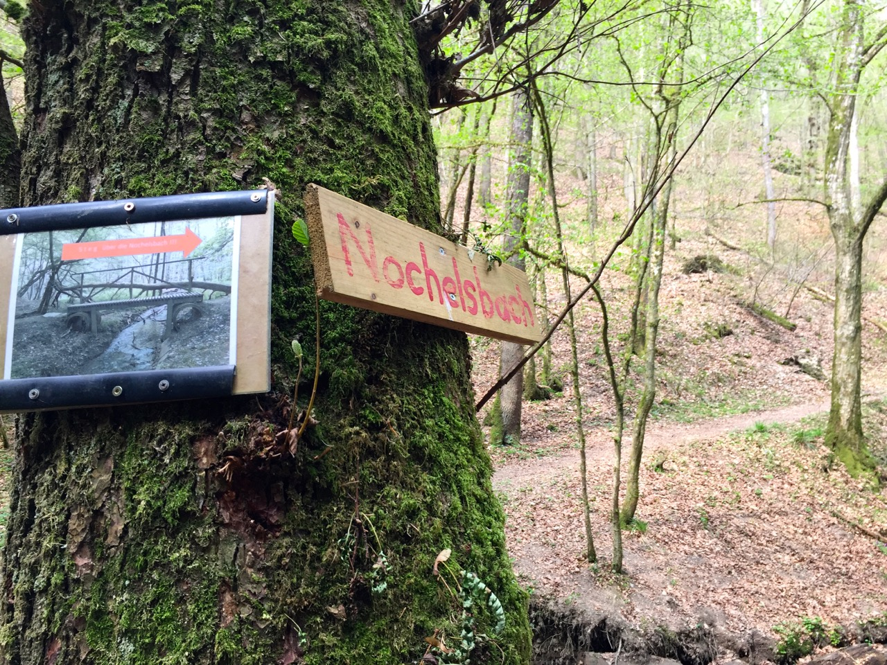 Geierlay Wanderweg – erst hinab ins Tal, dann wieder hinauf