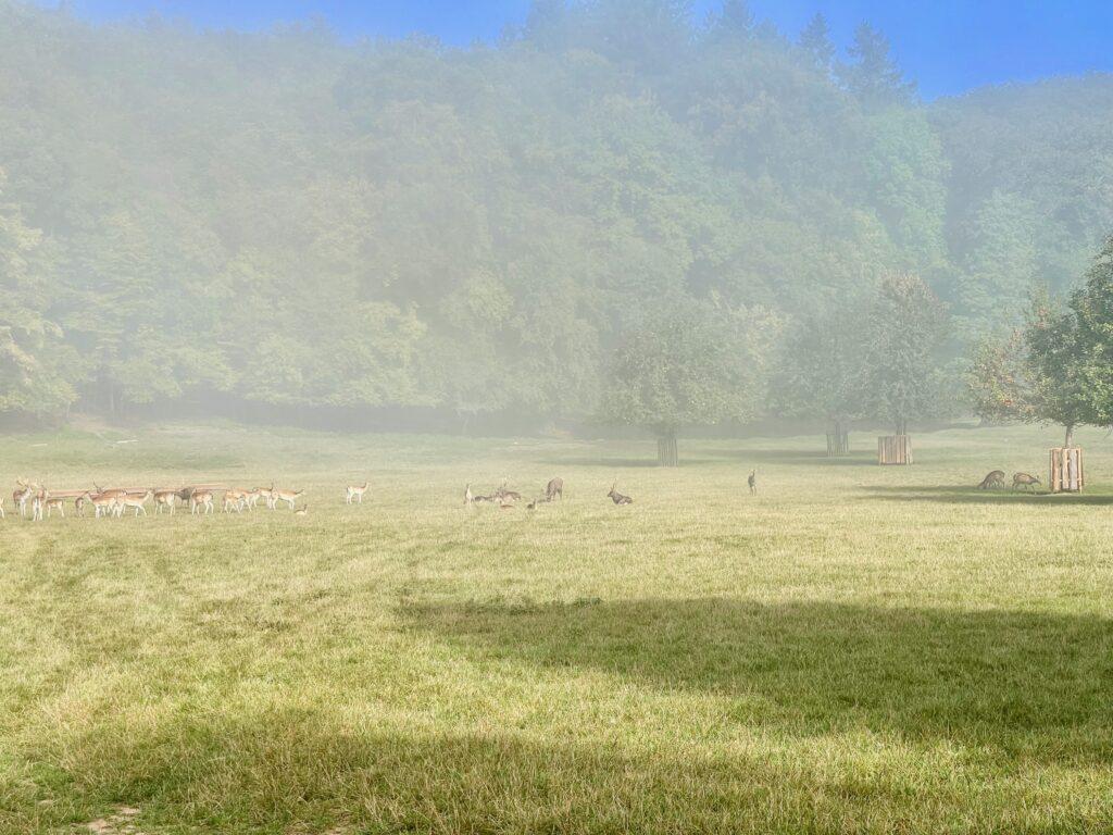 Rotwild Wildpark Bad Kissingen