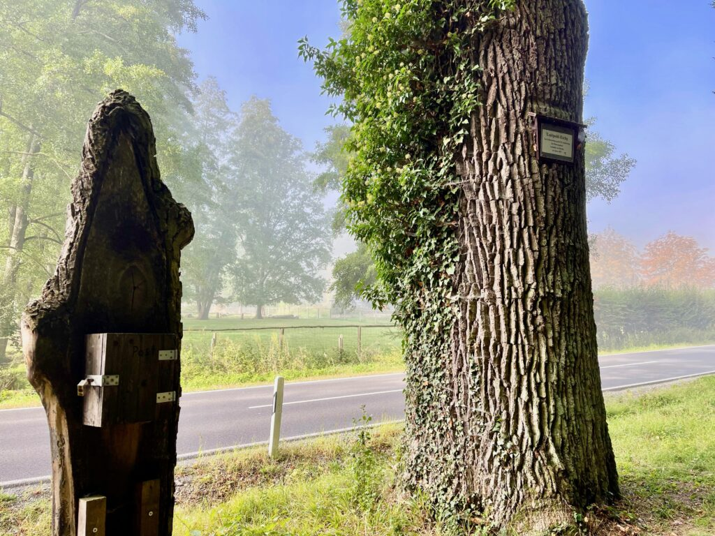 Luitpoldeiche Bad Kissingen