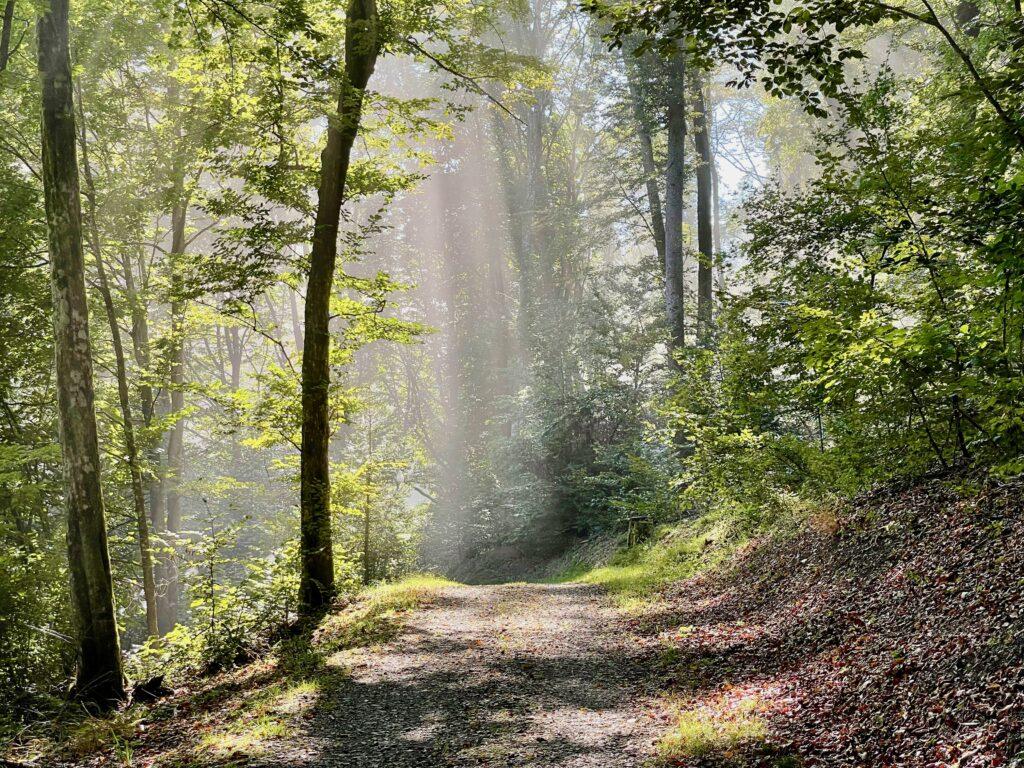Wandern im Klauswald Bad Kissingen