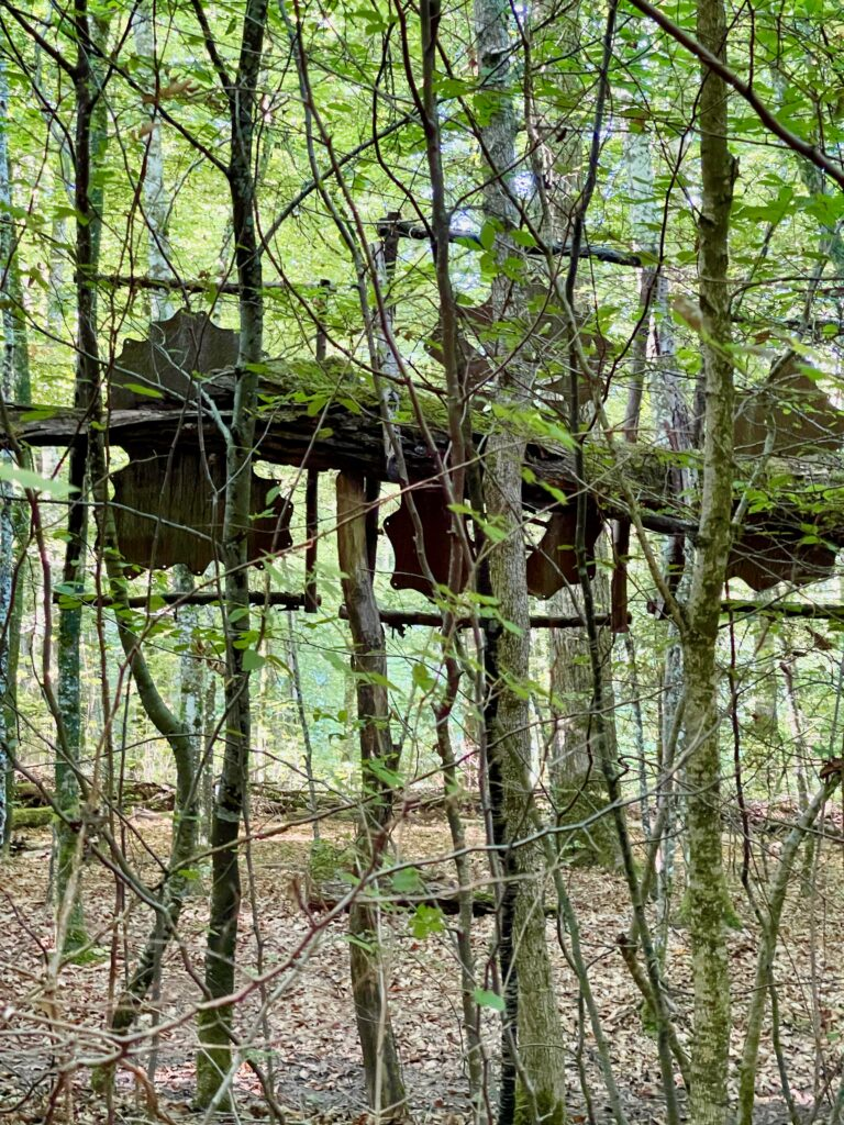 Wald fuer die Seele Klauswald Bad Kissingen