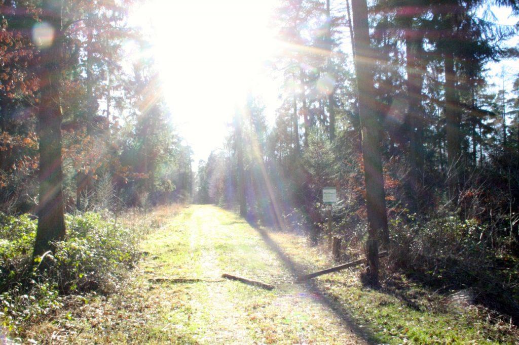 Wanderung auf den Nordpfaden - Wanderbares Deutschland