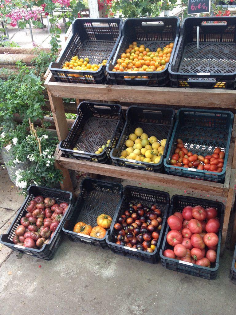 Tomatenvielfalt - ich kann mich nicht entscheiden