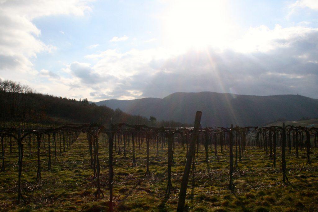 Wandern auf dem Rotweinwanderweg - zu jeder Jahreszeit ein Erlebnis