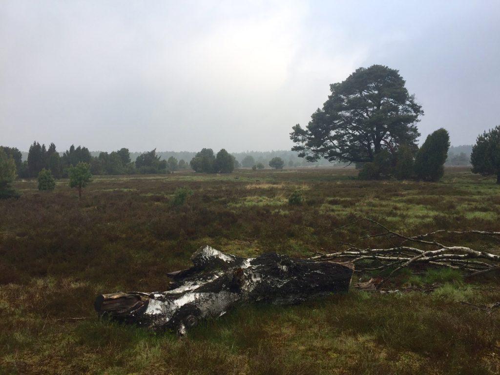 Regenwetter Lueneburger Heide