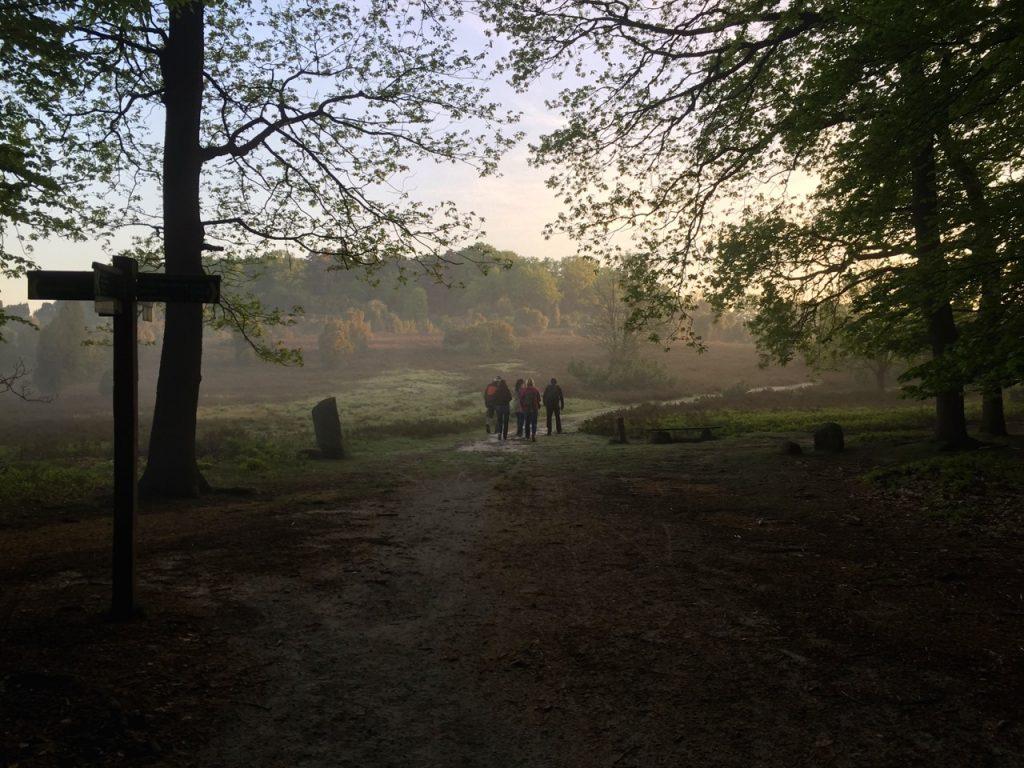 Wir verlassen den Wald
