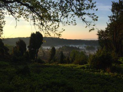 Sonnenaufgangswanderung zum Totengrund Bispingen