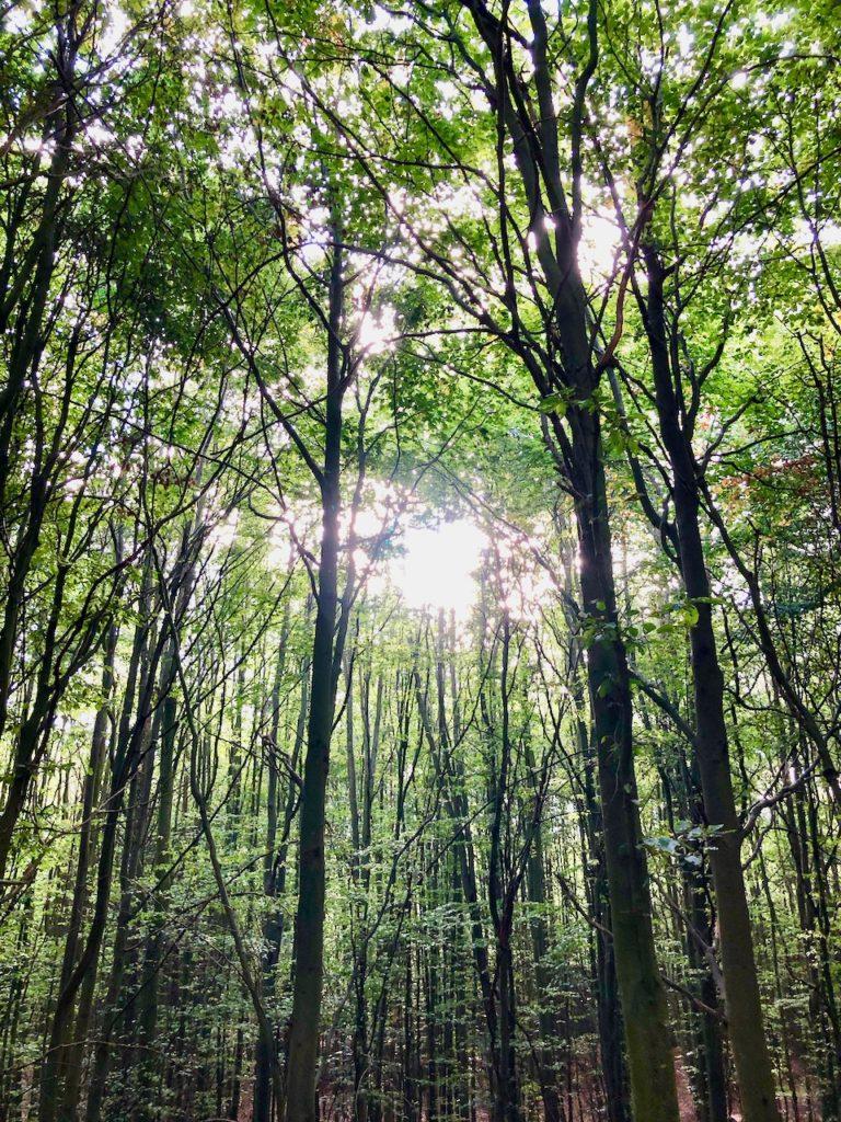 Wandern Nordsee Wald