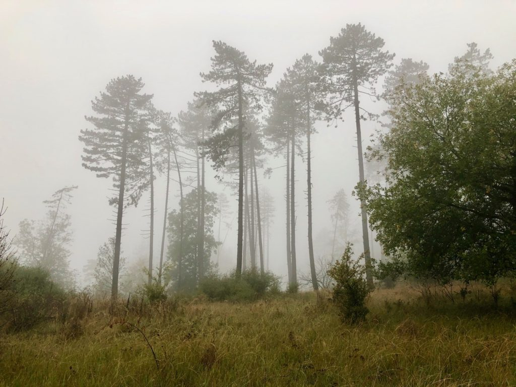 Waldbaden Hessen
