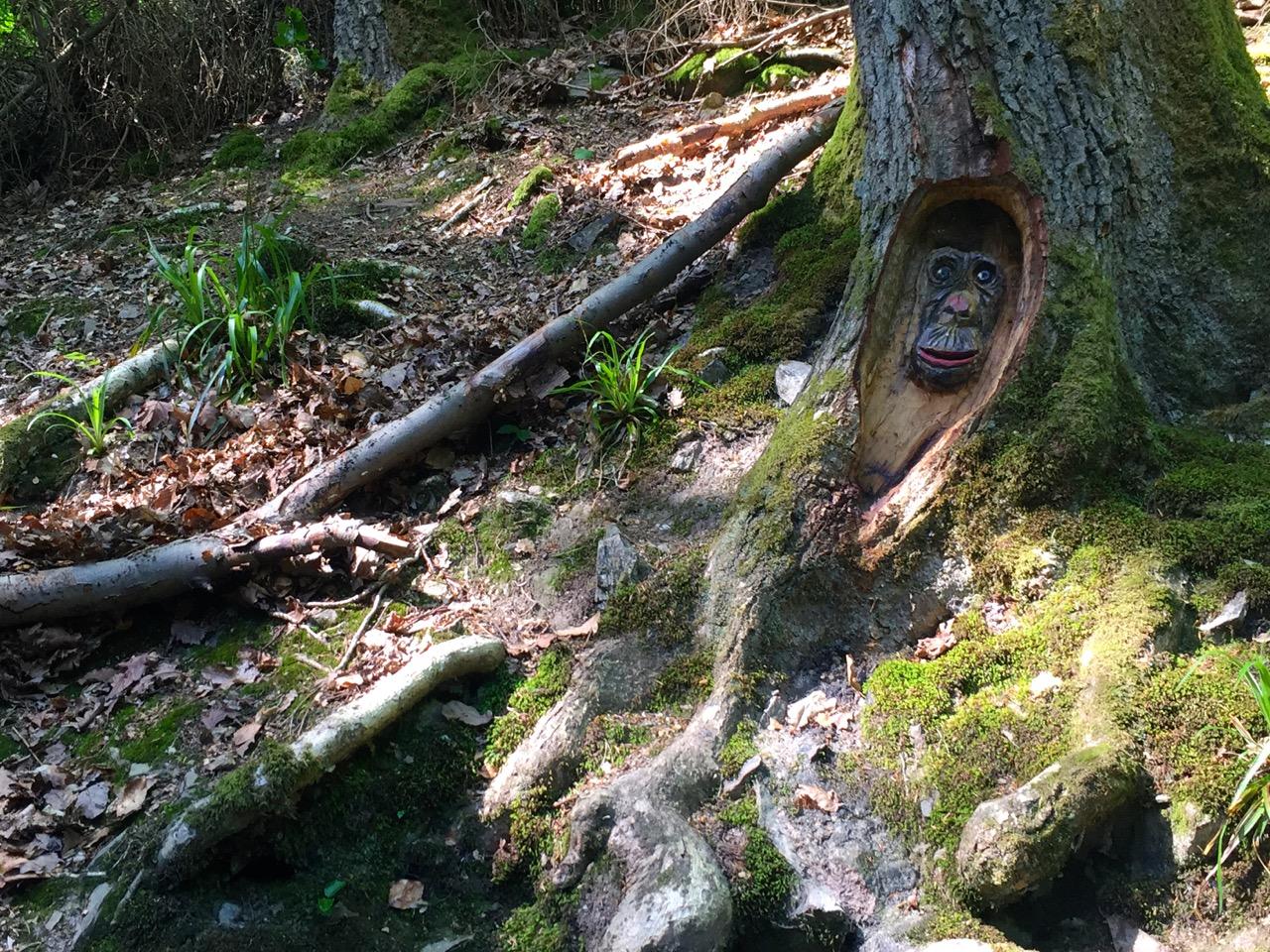 Baumgeister Tour durch die Steckenschlaeaeferklamm