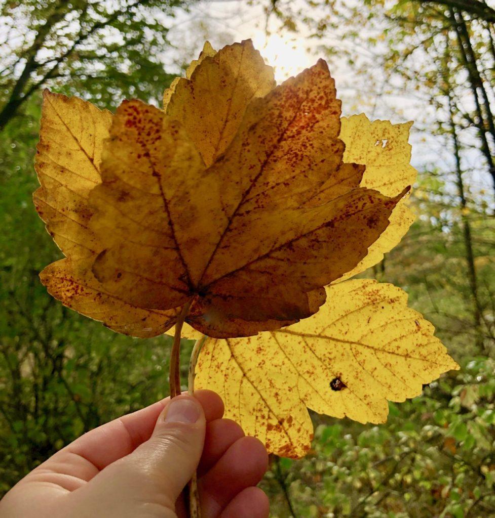 Waldbaden im Herbst in Hessen