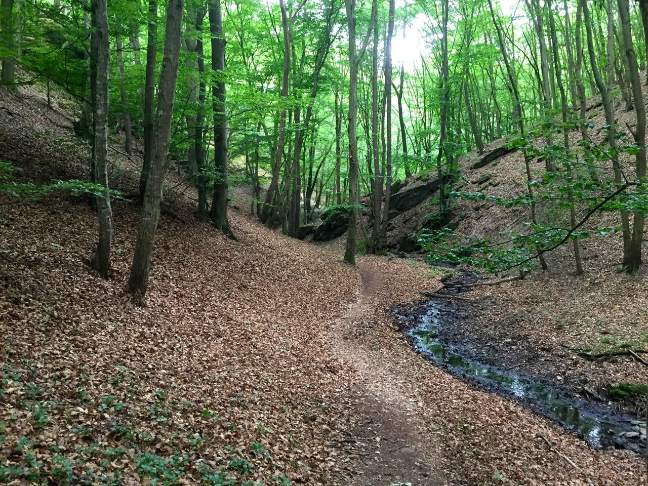 Traumschleife Ehrbachklamm – Im Tal fließt ein kleiner Bach