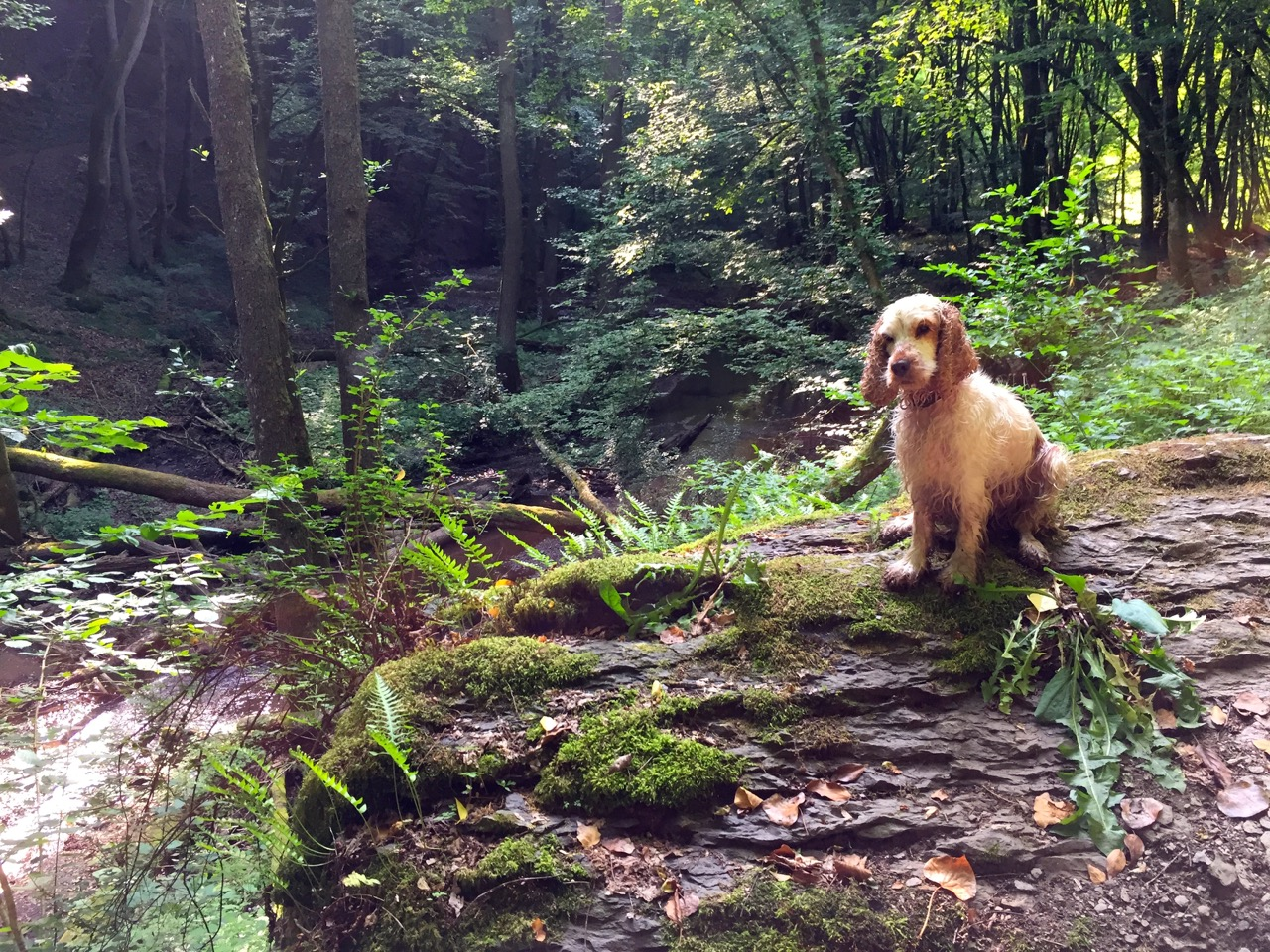 Wanderhund Josy mit uns unterwegs