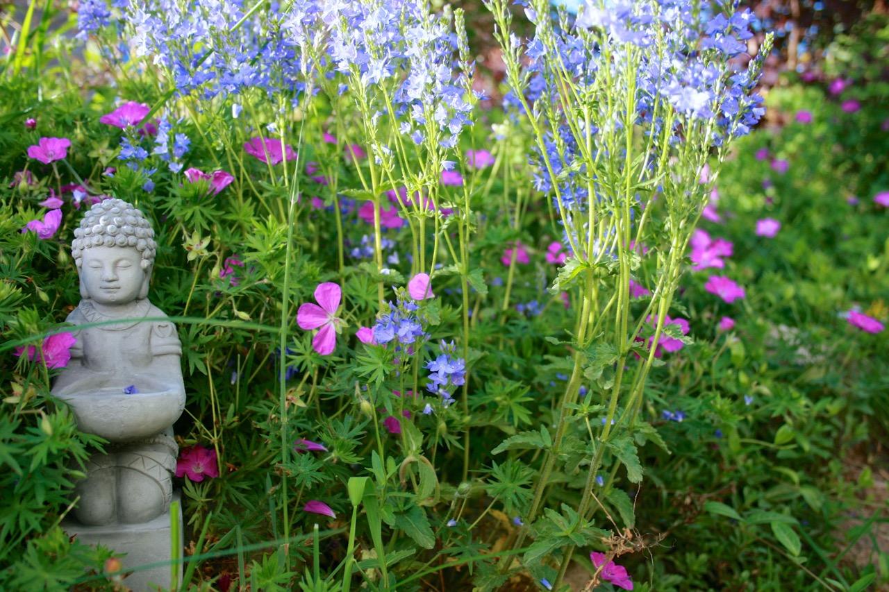 Blick in den SPANESS-Garten