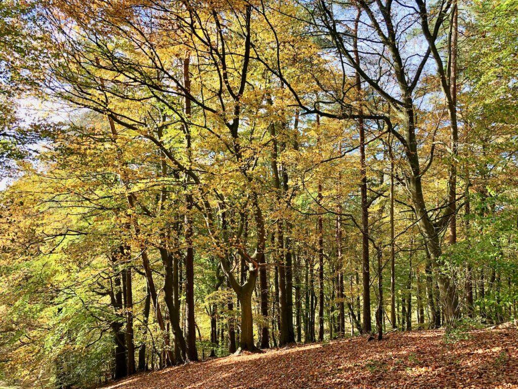 Deutschland Wald