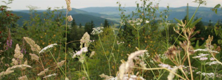 Sommer im Sauerland