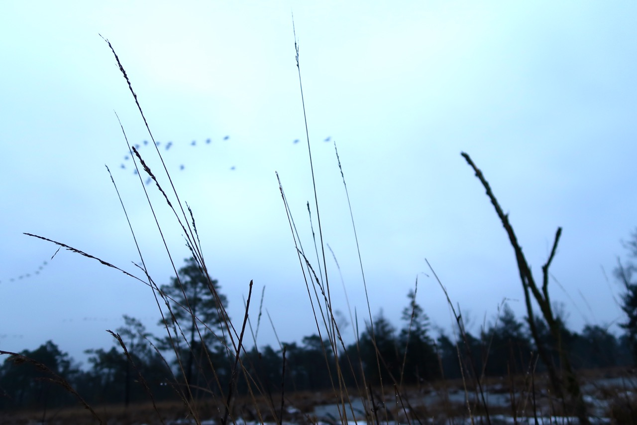 Tister Bauernmoor Kraniche ziehen über meinen Kopf hinweg
