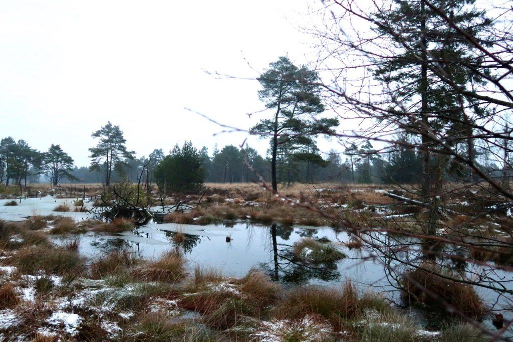 Naturschutzgebiet Tister Bauernmoor
