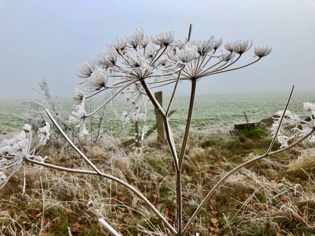 Winterwanderung Nordpfade Kuhmuehlen