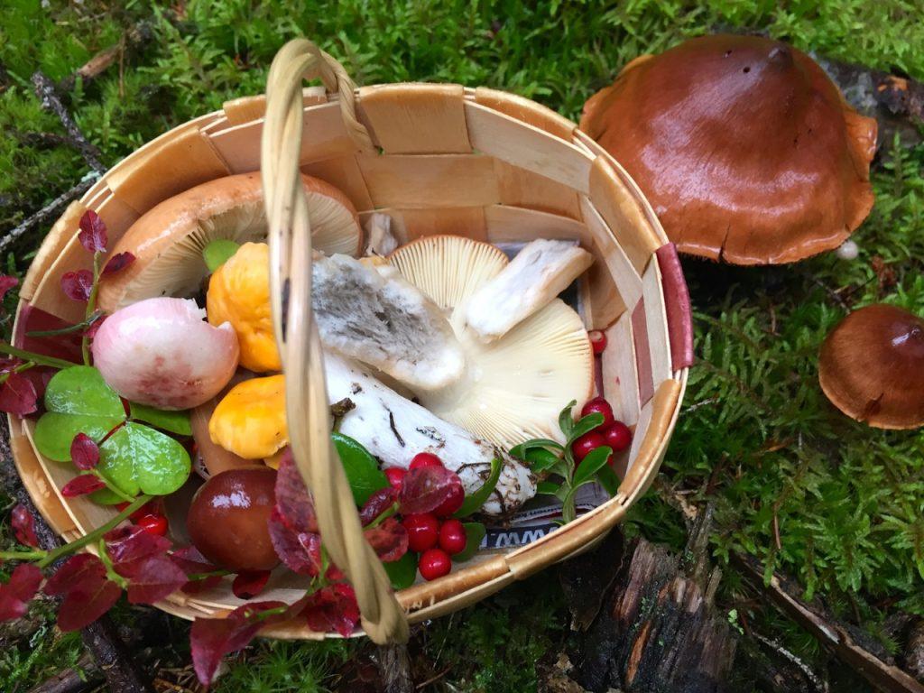 Finnland Reise - Pilze und Kräuter sammeln
