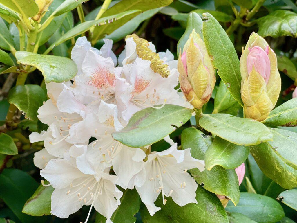 Rhododendronpark Verden