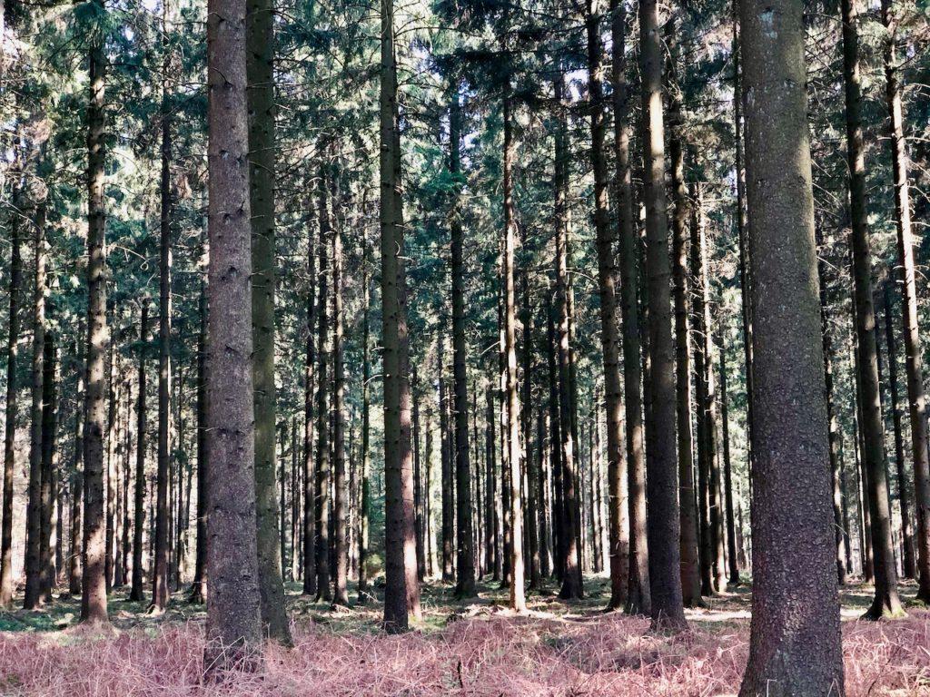 Schwarze Berge Hamburg Wald