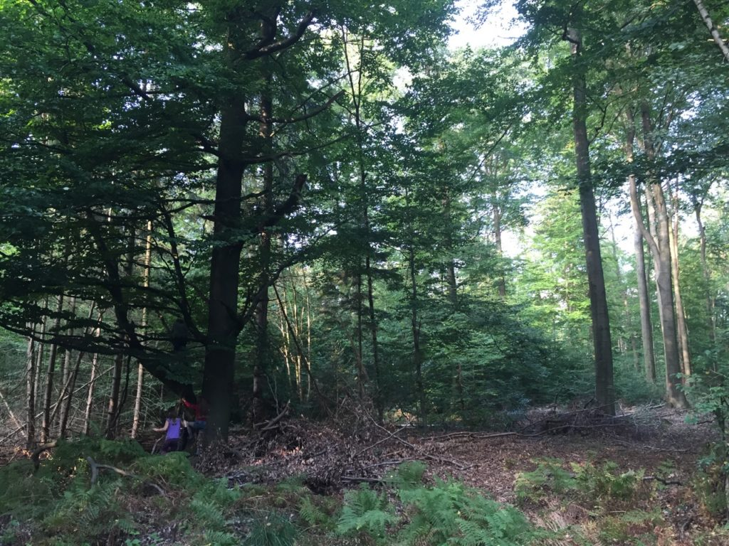 Natur Reatreat Baumfreundschaft
