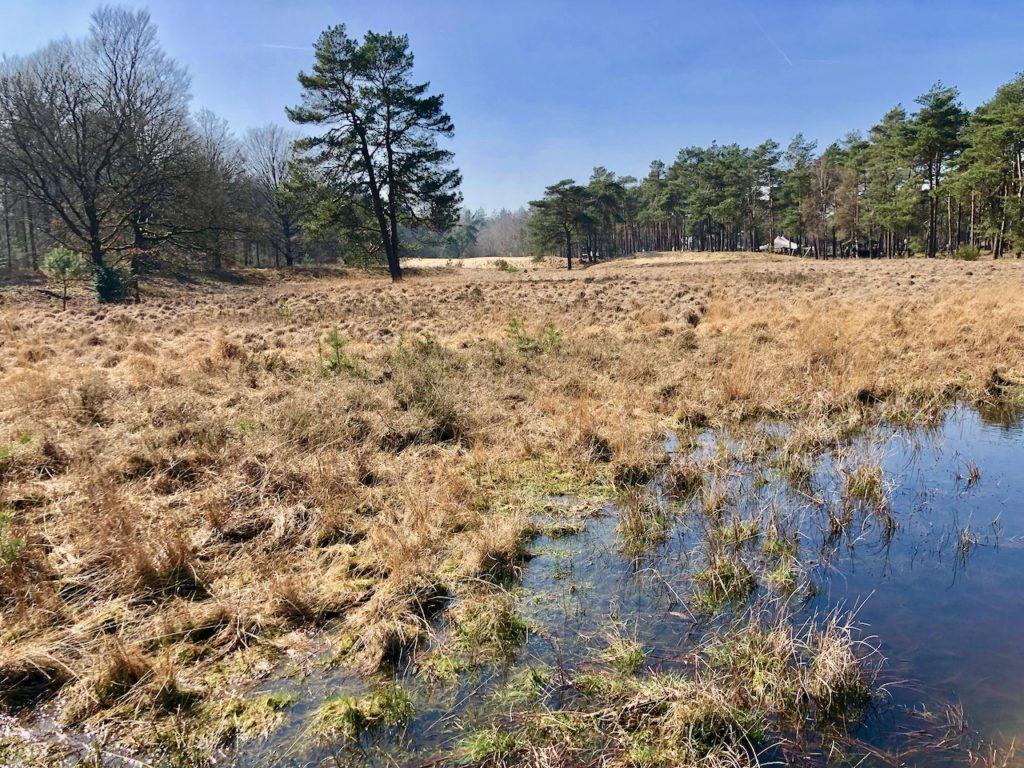 Hoge Veluwe Nationalpark Moor, Wald und Duenen