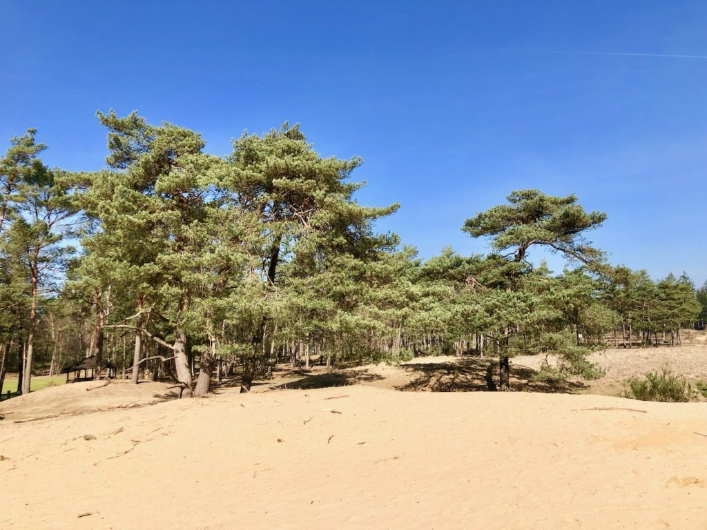 Hoge Veluwe Nationalpark