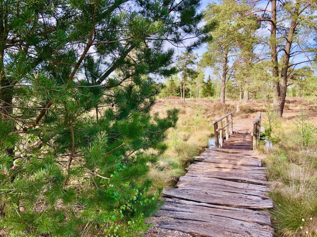 Wanderprojekt Nordpfade Tister Bauernmoor