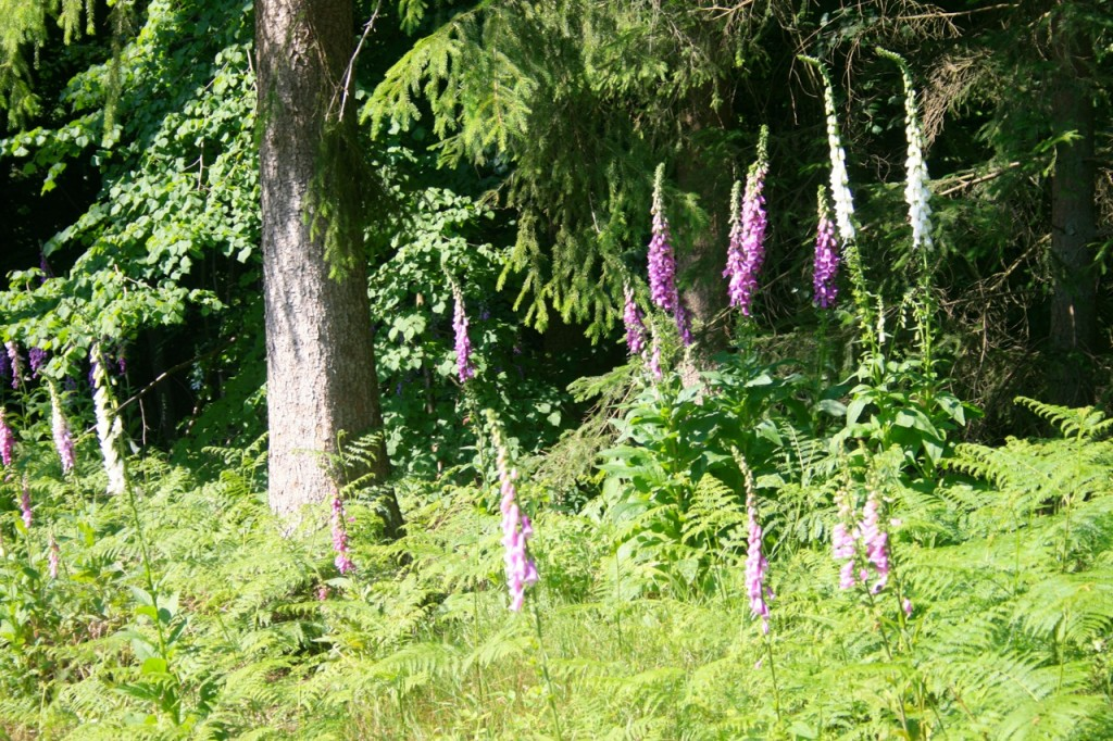 Wunderschöne Entdeckungen im Wald
