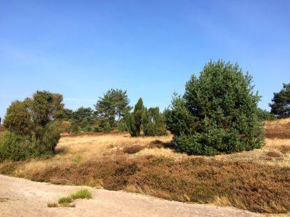 Abwechselungseiche Landschaft entlang des Heidschnuckenweg