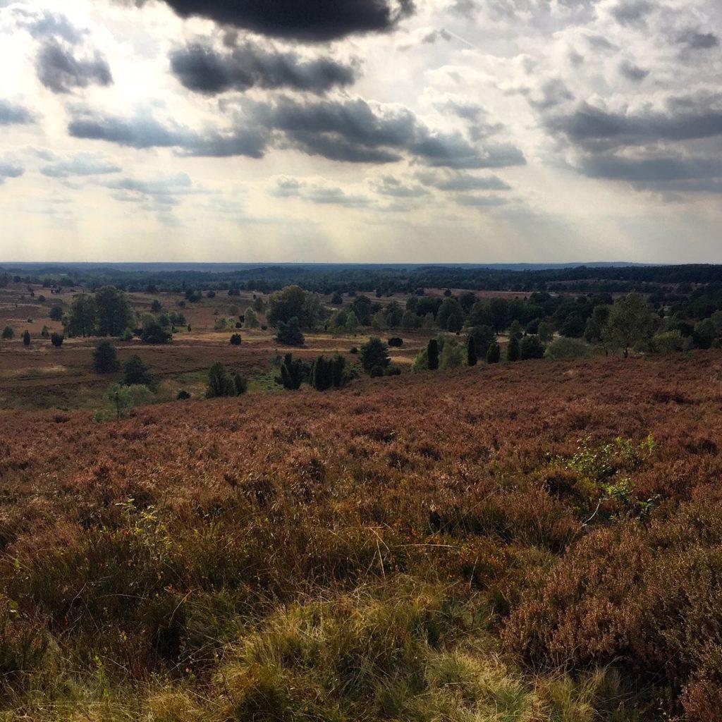 Wunderschöne Heidelandschaft - Am Fuß des Wilseder Berg