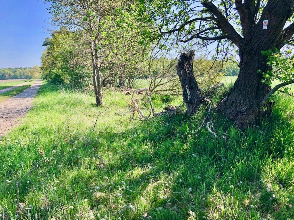 Nordpfade Elm Hinterholz und Hohenmmoor