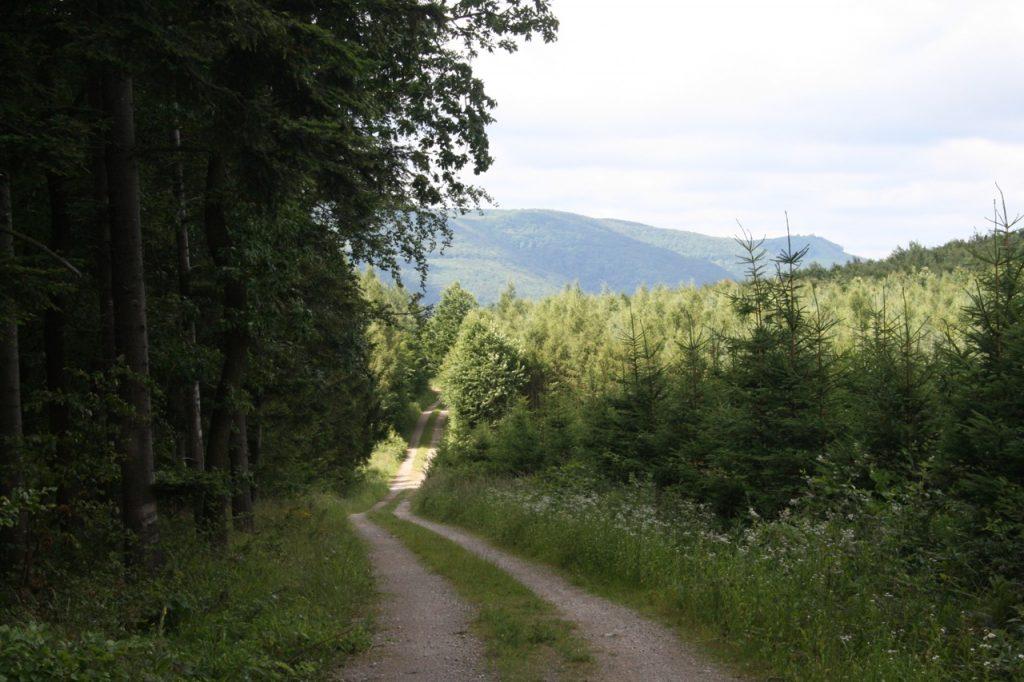 Weg durch den Wald - Slow Traveling Idee - Langsam Reisen Idee