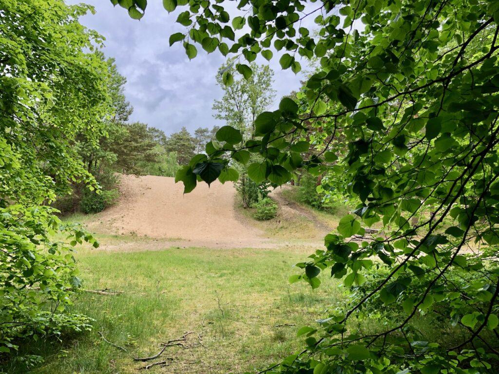 Besenhorster Sandberge und Elbsandwiesen