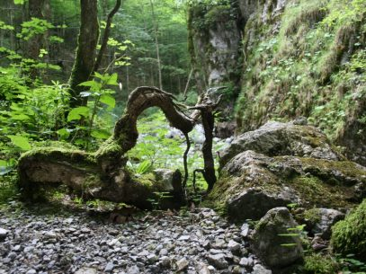 Waldbaden, Wald-Wellness, Waldcoaching