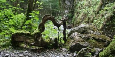 Eine Runde im Wald ist Wellness-Feeling pur