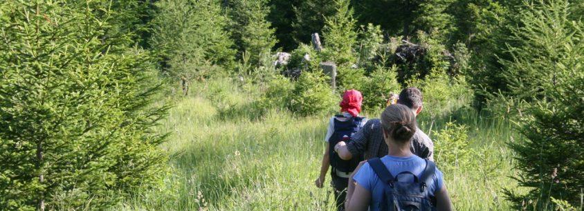 Wandern - ein sanfter Ausdauersport