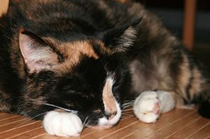 Haustieren sagt man eine helfende und heilende Wirkung nach