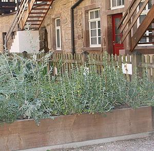 Kräutergärten haben Tradition