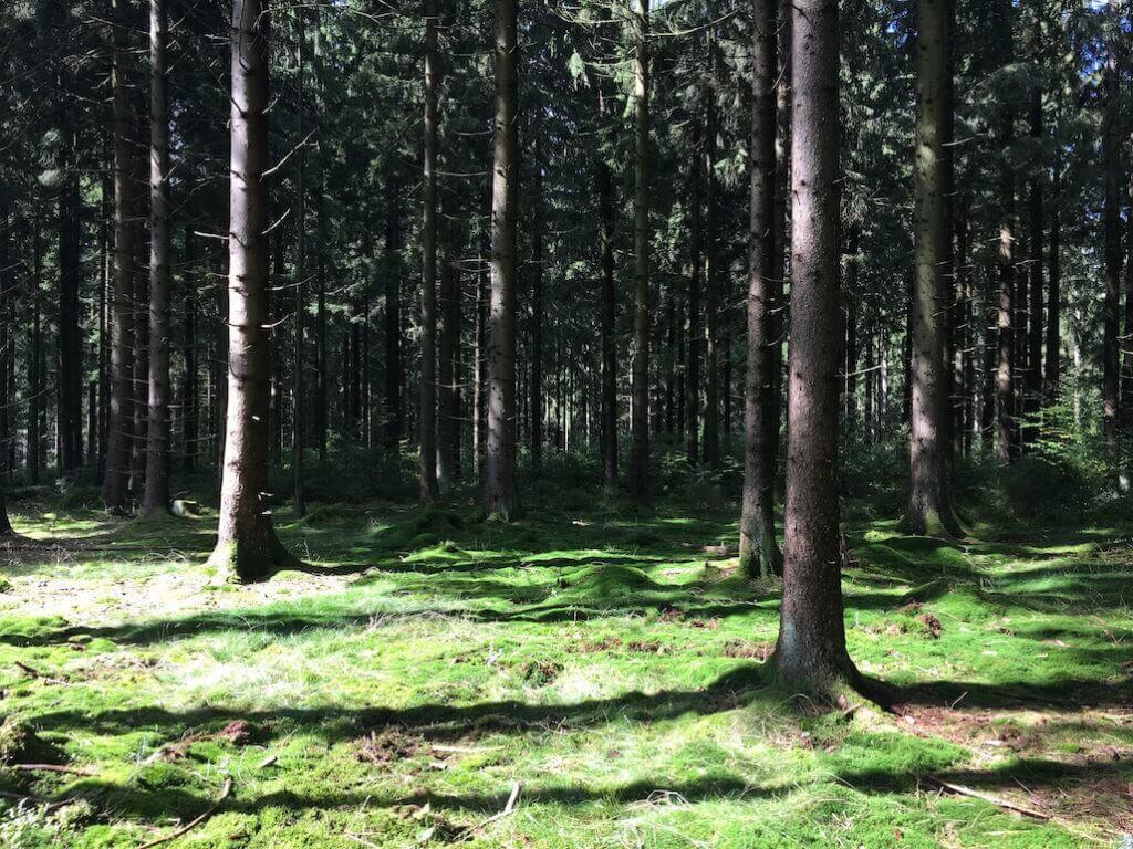 frankenwald-baum-pflanzen-sandra-wickert