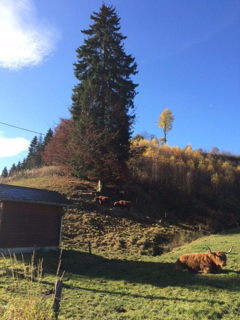 Herbstliche Sonnenstimmung im Sauerland