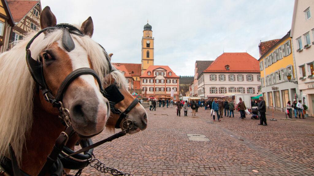 mergentheim_pferdemarkt