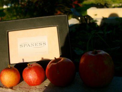 Wellness-Themen zu allen Jahreszeiten im SPANESS-Wellness-Magazin